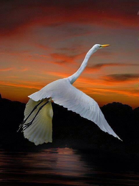 soar-like-the-tides-soar-to-their-moon-they-fear-not-failure-only-rejoice-and-2.jpg