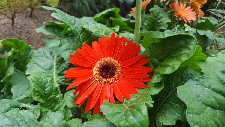 THE REBELLIOUS FLOWER